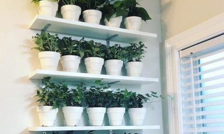 How to Create a DIY Indoor Plant Wall (& Why)  A plant wall is an easy way to add charm to any room and get the clean air benefits as well!