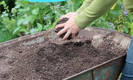 DIY potting soil recipes for seed starting, container gardening, houseplant growing, and more. #containergardening #gardening