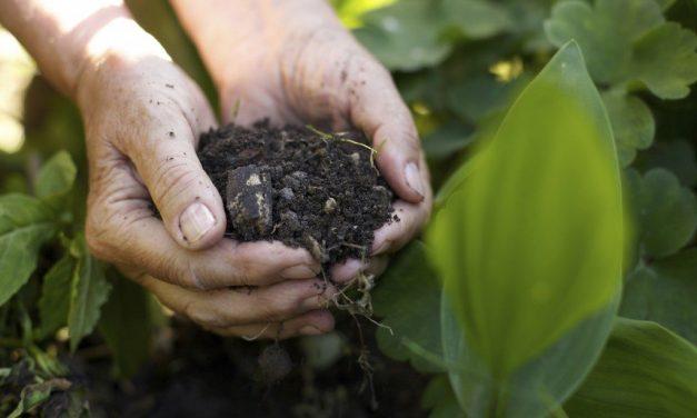 5 Best Hacks For Growing Healthy, Pest-Free Fruit