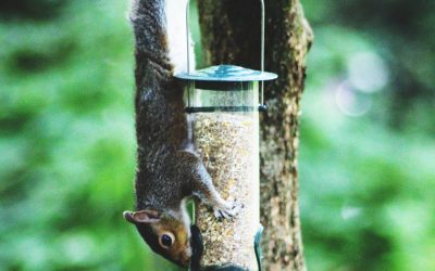 12 Tips for Squirrel-Proof Bird Feeders