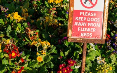 How to Keep Dogs Out of Flower Beds