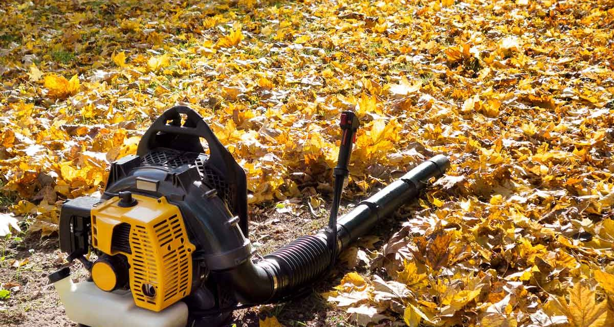 8 Leaf Blowers We Love