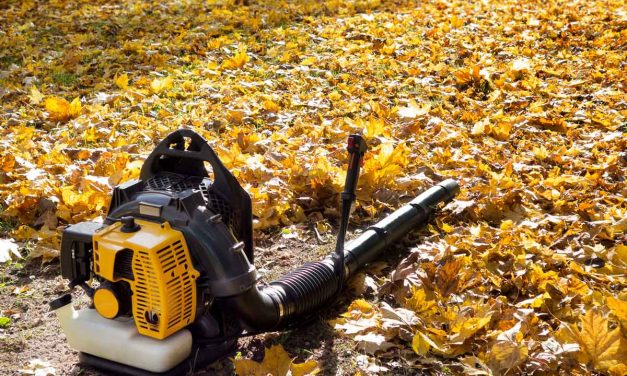 8 Leaf Blowers We Love