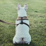 9 Best Dog Harnesses
