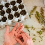 10 Tips for Growing Plants From Seed