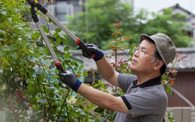 New Homeowner's Guide to Pruning Your Garden